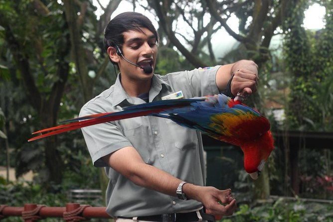 Dine with Parrots