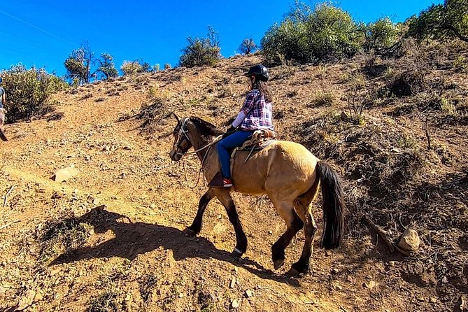 Horseback riding tour plus Concha y Toro Vineyard