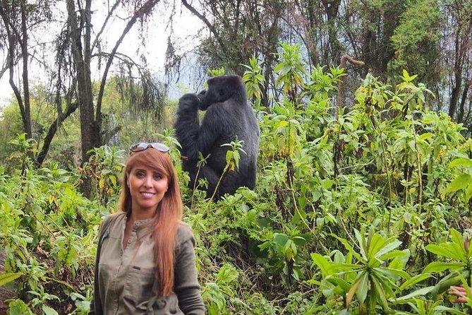 2 Days Gorilla Trekking In Rwanda