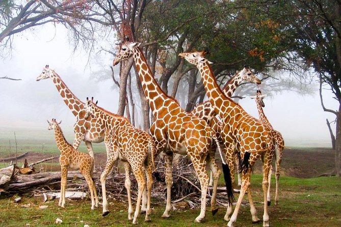 Nairobi Airport Layover to Giraffe Center & Elephant Orphanage