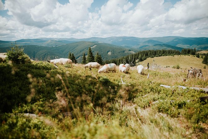 Sheep Happens - Huts, Sheepfolds and Burduf*