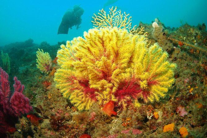 Guided diving Taormina & Isola Bella