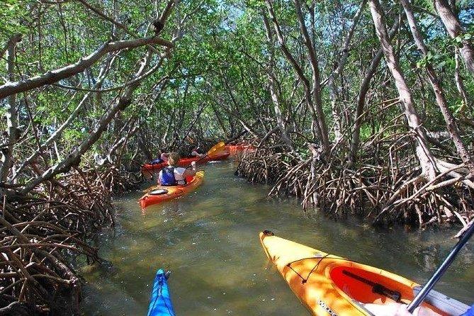 See Florida mangroves up close!