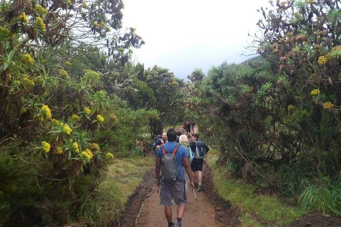 Mount Kilimanjaro Hiking Via Marangu Route. photo 21