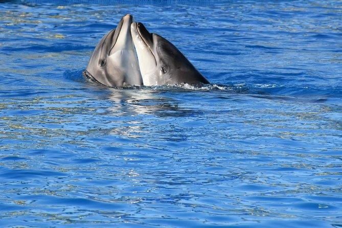 Dolphin Show Fabulous Dolphina - Hurghada
