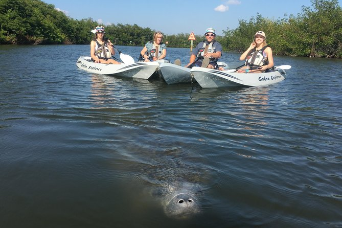Group Kayak Tour to Search for Wildlife and Explore the Mangrove Tunnels