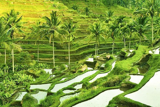 Amazing Half-Day Tour: Ubud Trip with Lunch Packages