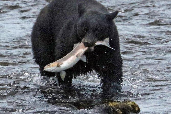 Ketchikan's Taste of the Wild-Wildlife Tour and Salmon Bake
