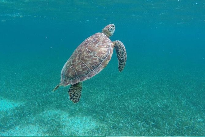 Hol Chan Speed Boat: Turtle, Manatee, Shark, StingRay and More from Caye Caulker
