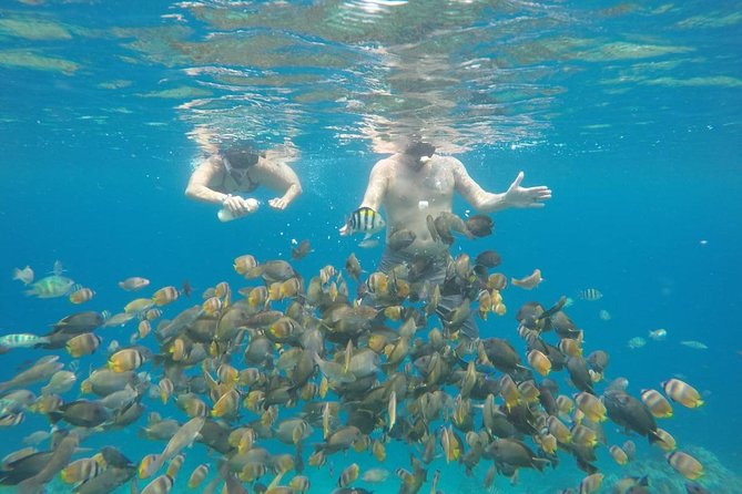 Snorkeling Tour In Gili Islands By Speedboat Pick up From Bali