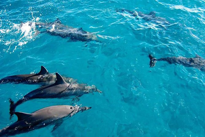 Dolphins and Jozani Forest National Park Tour in Zanzibar