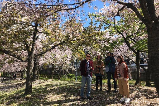 Osaka Cherry Blossom Walk with Local
