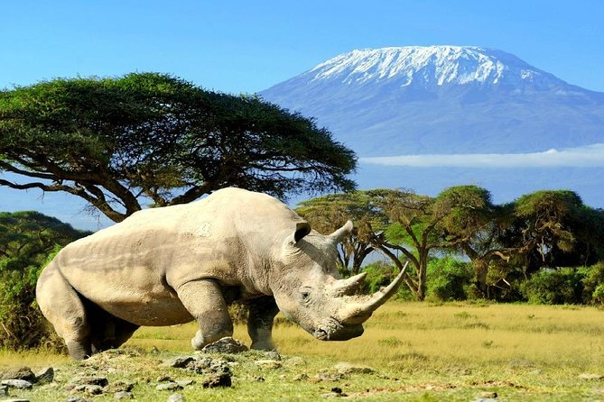 4 Days 3 Nights Mombasa, Tsavo, Amboseli Private Safari photo 3