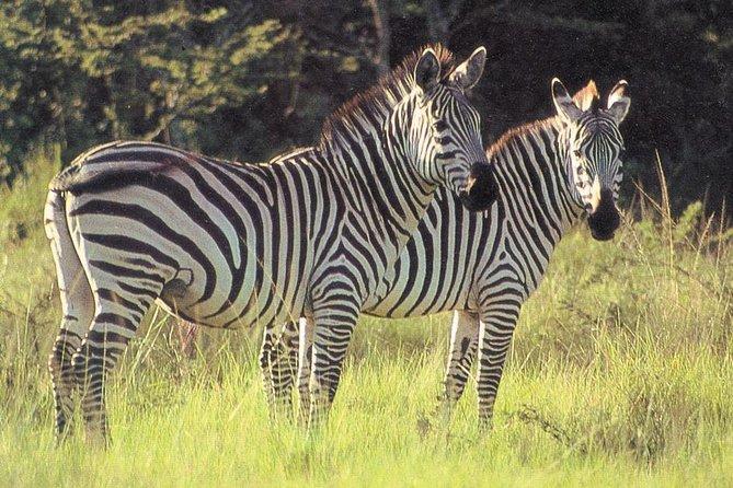 2 Days Lake Mburo National Park
