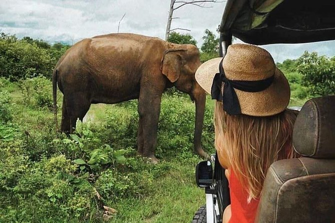All Inclusive Safari in Wilpattu National Park from Negombo