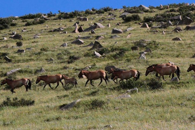 1 Day tour: Khustai National Park: Przewalski's wild horses ( all inclusive )