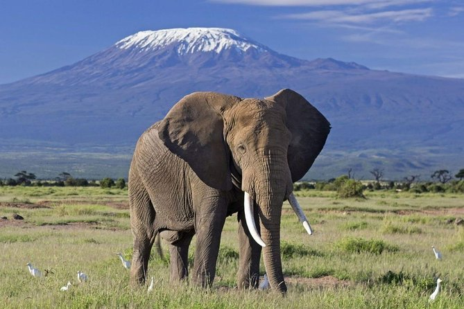 6 Days Amboseli, Nakuru Masai Mara Safari