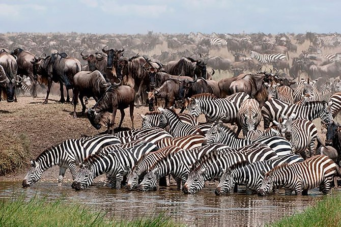 5 Days 4 Nights Nakuru, Naivasha, Masai Mara Budget Safari