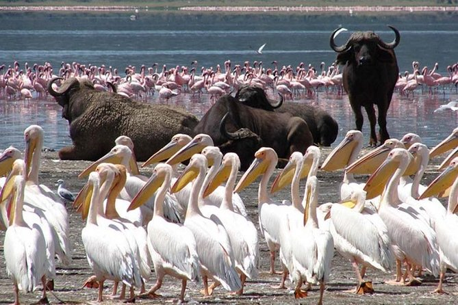 2 Days Lake Nakuru Safari Tours Kenya photo 1