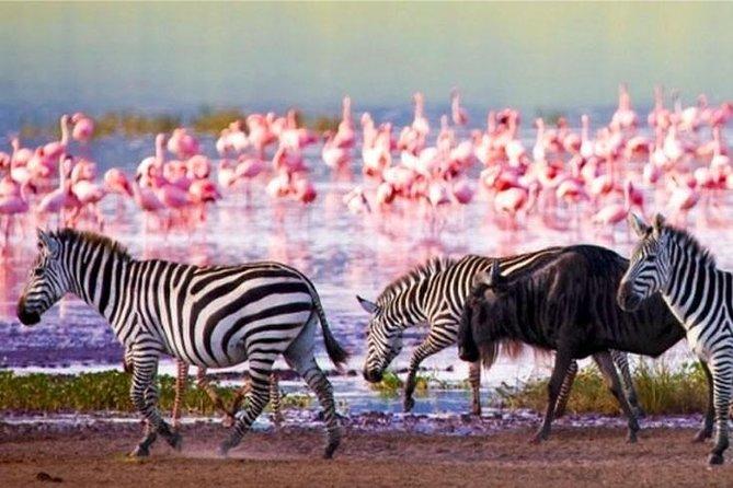 2 Days Lake Nakuru Safari Tours Kenya photo 7