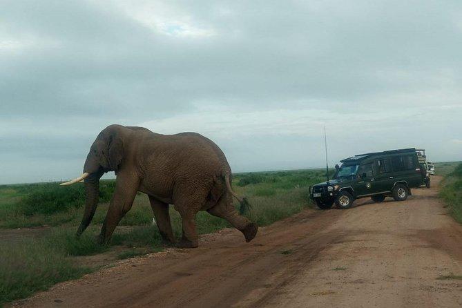 5 Days Lake Mnayara - Serengeti - Ngorongoro - Tarangire Camping group safari