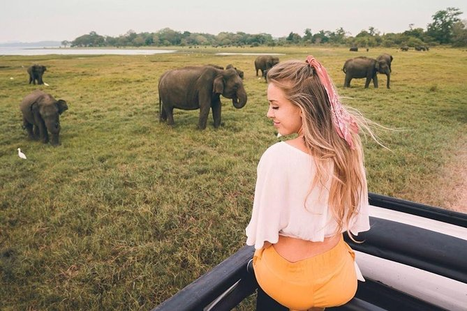 All Inclusive Private Safari in Minneriya National Park with Guide