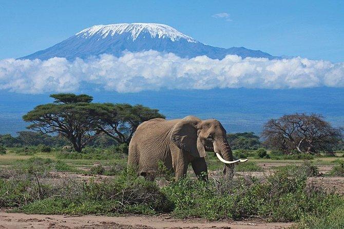 2 Days Amboseli National Park Kenya Safari