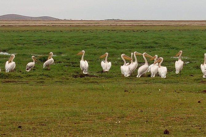4 days maasai mara (migration) - lake nakuru (flamingoes) safari