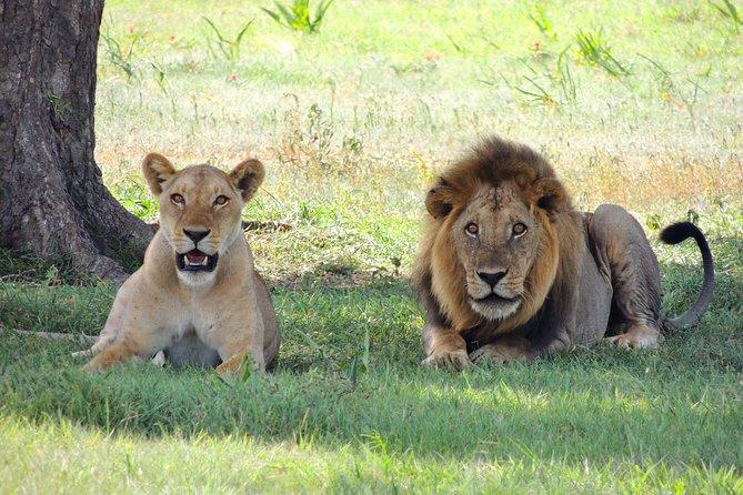 9 Days Masai Mara, Amboseli, Mombasa Safari