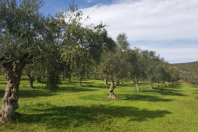 Walk at the paths of Olive groves and vineyards in Monemvasia