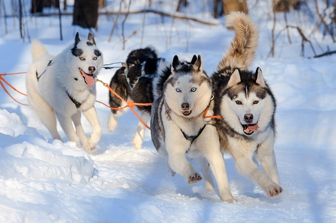 Husky Long Trail Adventure in Arctic Circle