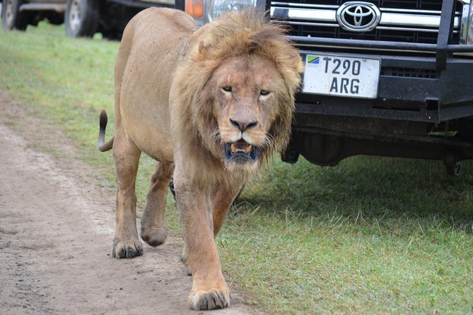5 Days Budget and Camping safari Lake Manyara , Serengeti &Ngorongoro crater