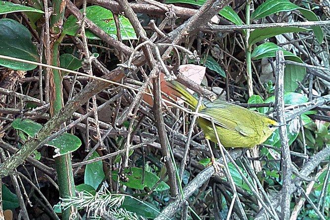 Private Birdwatching in Bogota
