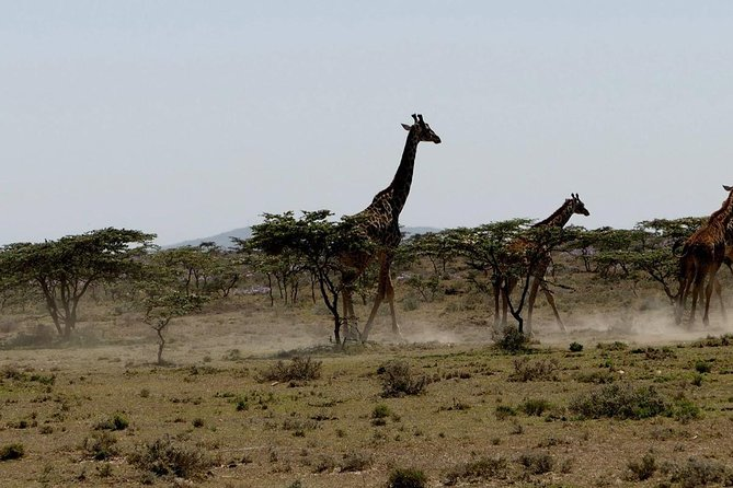 2 Days safari of Masai Mara