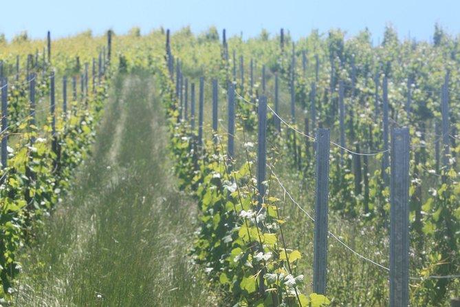 Winegrower ride (Visit the vineyard)