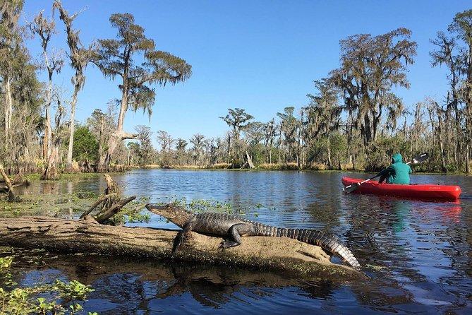 Whitney Plantation and Manchac Swamp Kayak Tour Combo