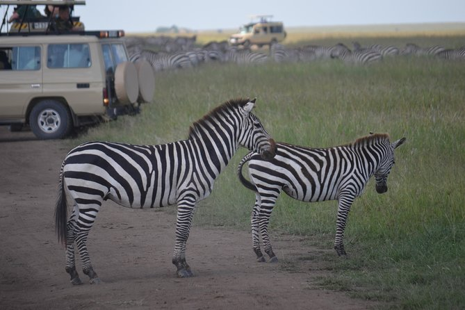 4 Days Camping Safari - Northern Tanzania