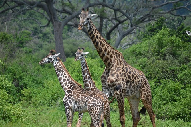 3 Days budget Lodge safari ,Tarangire park ,Ngorongoro crater Lake Manyara park