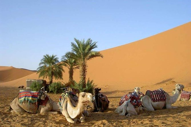 8 Days Tour Nomad Adventure Desert Camel Trekking From Marrakech Merzouga photo 1