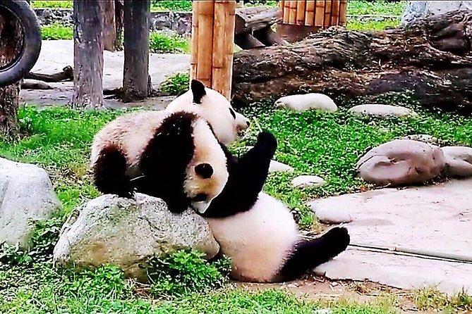 Chengdu Private Round Trip Transfer to Dujiangyan Irrigation System+Panda Garden