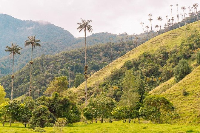 Cocora, Salento and Filandia Tour