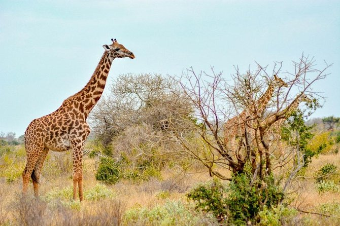 4 Days 3 Nights Mombasa, Tsavo, Amboseli Private Safari photo 2