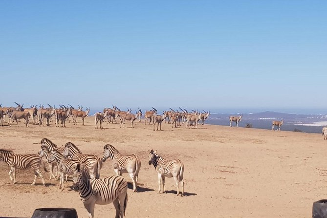 West Coast Safari and Heritage Tour