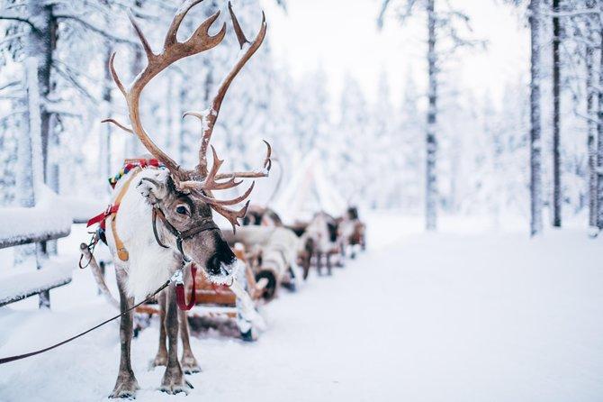 Husky, Reindeer Farm and Santa Village Experience