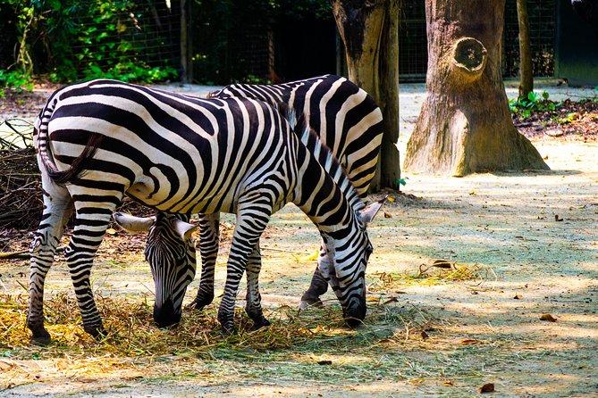 Singapore Zoo Wildlife Photography