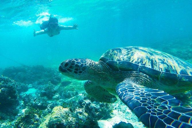 Whale Shark Encounter, Moalboal Sardine and Pescador Island + FREE USE of GOPRO