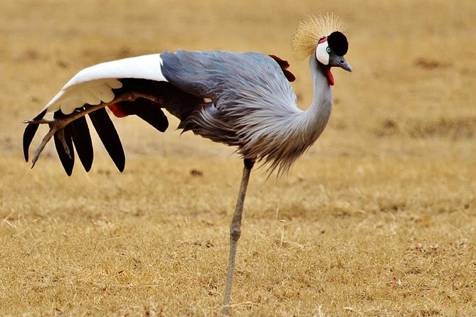 4 Days Private Safari from Arusha with Guide