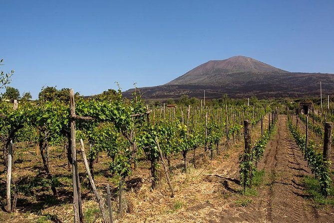 Mount Vesuvius & Wine Tasting with Lunch Private Tour from Sorrento Coast