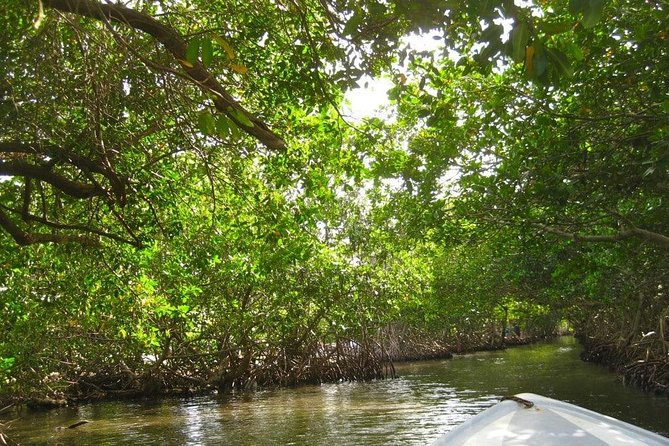 East End Tour and Mangrove
