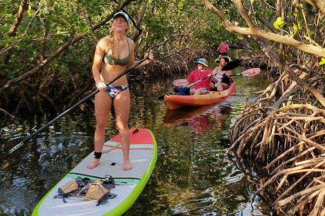 Paddleboard Tour Through Lido Mangrove Tunnels